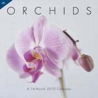 Orchids 2010 Wall Calendar