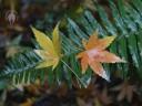 Autumn leaves fallen onto fern