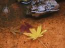 Leaves floating in birdbath