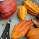 Cocoa pods and Vanilla beans