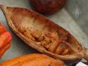 Part of a Theobroma cacao pod with dried cocoa beans