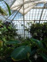 Inside the Conservatory of Flowers in Golden Gate Park