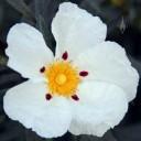 Bloom in Golden Gate Park, San Francisco