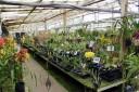 Santa Barbara Orchid Estate greenhouse benches