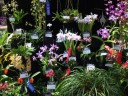 Exhibit at New Orleans Orchid Society Show 2012