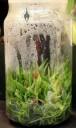 Cattleya seedlings grown in a flask