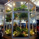 Cool growing orchids in air conditioned display