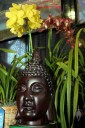 Cymbidiums and Buddha