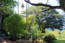 Botanical Garden in Waimea Valley