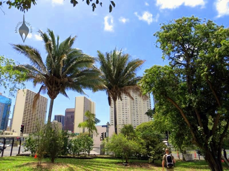 ... Looking At Downtown Honolulu From Southern Tip Of Foster Botanical  Garden