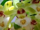 Gastrochilus flower
