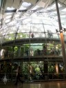 Rainforest dome at California Academy of Sciences