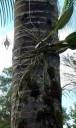 Mounted orchid, Panaewa Zoo, Hilo, Hawaii