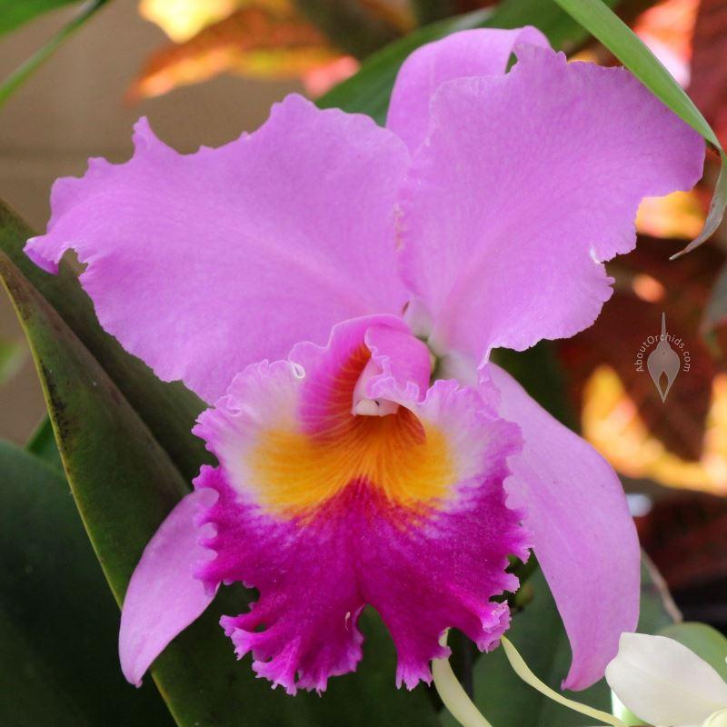 Aboutorchids