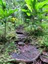 Hiking trail, Lyon Arboretum, Honolulu, Hawaii