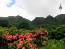 View of Ko'olau Mountains at Lyon Arboretum, Honolulu, Hawaii