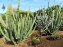 Golden Barrel Cactus and other cacti, Koko Crater Botanical Garden, Honolulu, Hawaii