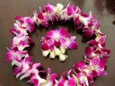 Lei made with Phalaenopsis-type Dendrobium hybrid flowers and tuberose flowers, Honolulu, Hawaii
