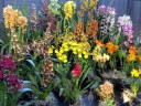 Orchid display, Pacific Orchid Expo 2015, San Francisco, California