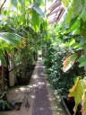 Chelsea Physic Garden, Tropical Corridor, inside view of glasshouse, London, UK