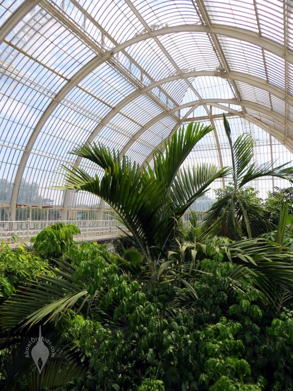 Kew_Gardens_Palm_House_3_800px Palm Garden House Plan on conservatory plans, tree plans, greenhouse plans, cathedral plans, pagoda plans, park plans, garden plans, pond plans, pavilion plans, wardian case plans,