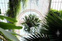 Palm House, view of hanging staghorn fern and other tropical plants inside glasshouse, Kew Gardens, London, UK