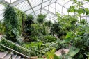 Tropical Rainforest Zone, Princess of Wales Conservatory at Kew Gardens, London, UK