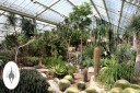 Cacti and succulents in Tropical Desert Zone, Princess of Wales Conservatory at Kew Gardens, London, UK