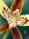 Orchid flower close up, Vallarta Botanical Gardens, Cabo Corrientes, Jalisco,