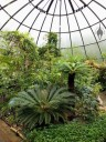 Inside a Tropical Greenhouse, Botanical Garden of the University of Zurich, Switzerland