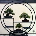 Bonsai trees on display on round metal stand, National Bonsai and Penjing Museum, US National Arboretum, Washington DC