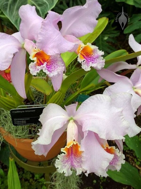 aboutorchids blog archive orchids at the montreal botanical garden