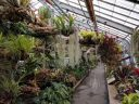 Inside the Tropical Rainforest Greenhouse, Montreal Botanical Garden, Canada
