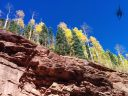 Fall foliage near Rico, Colorado, yellow aspen trees and conifers, Rocky Mountains, Western Slope