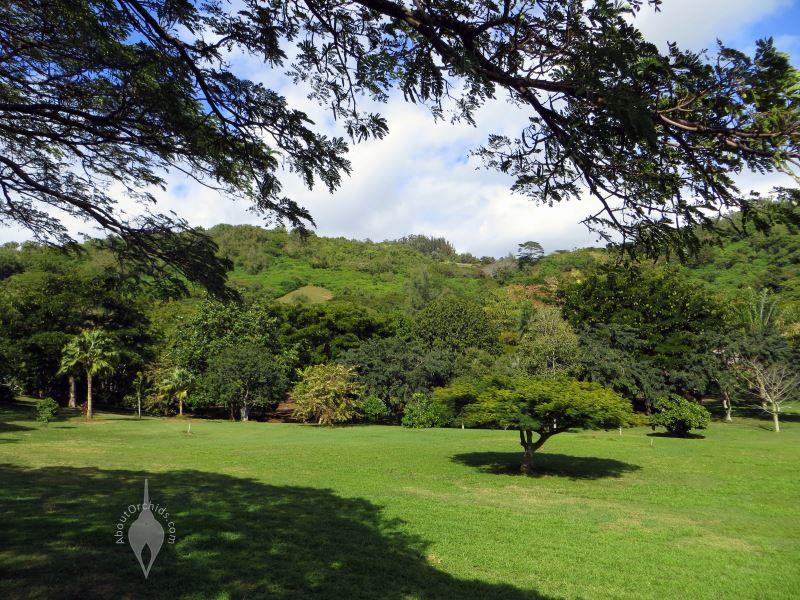 Aboutorchids - National tropical botanical garden kauai ...