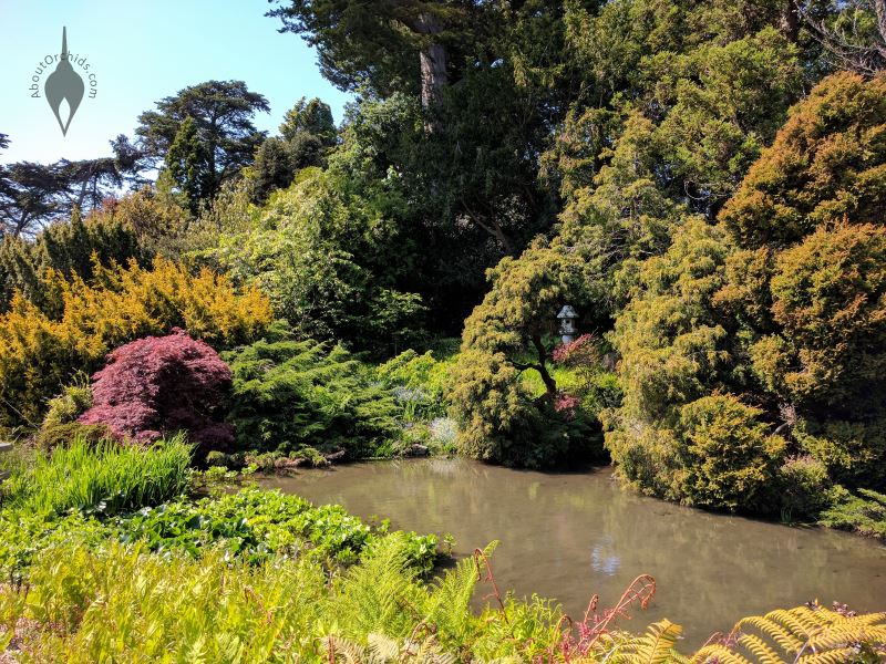 Pond And Trees, San Francisco Botanical Garden, Strybing Arboretum, Golden  Gate Park ...