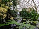 Aquatic Plants room, water, reflections, glasshouse, tropical plants, vines, water lily pads, Conservatory of Flowers, Golden Gate Park, San Francisco, California