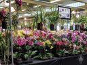 Pacific Orchid Expo 2018 vendor area, Moth Orchids, Vandas, Cymbidiums, SF County Fair Building, Golden Gate Park, San Francisco, California