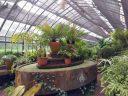 Glasshouse interior, invernáculo, Carlos Thays Botanical Garden, Jardín Botánico Carlos Thays de la Ciudad Autónoma de Buenos Aires, Argentina