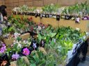 Plant sales area, Pacific Orchid Expo 2019, Hall of Flowers, Golden Gate Park, San Francisco, California
