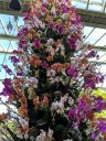 Moth Orchid display, Phalaenopsis hybrids, Phals arranged in a tower, Princess of Wales Conservatory, RBG Kew, Kew Gardens, London, UK