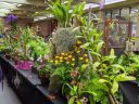 Display tables at Orchids in the Park 2019, Hall of Flowers, Golden Gate Park, San Francisco, California
