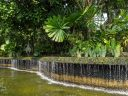 Waterfall with tropical plants, Singapore Botanic Gardens, UNESCO World Heritage Site