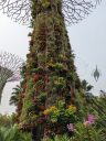 Orchid bromeliads and ferns growing on a Supertree, looking up at a Supertree from ground level, Gardens by the Bay Nature Park, Singapore