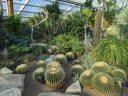 Tropical Desert Zone with cactus and succulents, barrel cactus, Princess of Wales Conservatory, Royal Botanic Gardens Kew, London, UK