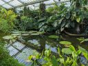 Waterlily pond and surrounding plants in Tropical Rainforest Zone, Princess of Wales Conservatory, Royal Botanic Gardens Kew, London, UK