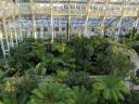 View of plants in Temperate House from upper walkway, large glasshouse, Kew Gardens, RBG Kew, London, UK