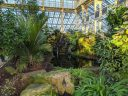 Waterfall and plants inside the Temperate House, large glasshouse, Kew Gardens, RBG Kew, London, UK