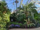 View inside Glasshouse, palm trees, plants under glasshouse roof, RHS Garden Wisley, Woking, Surrey, UK