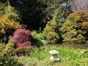 Pond surrounded by trees and other plants, red Japanese maple, Japanese stone lanterns, Strybing Arboretum, Golden Gate Park, San Francisco, California